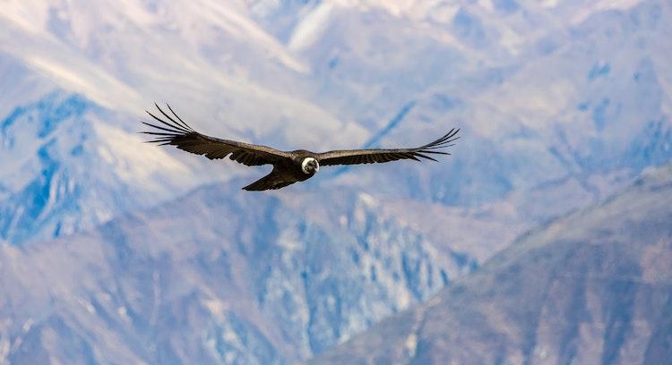 ave en el aire