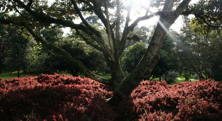 Bogotá Botanical Garden