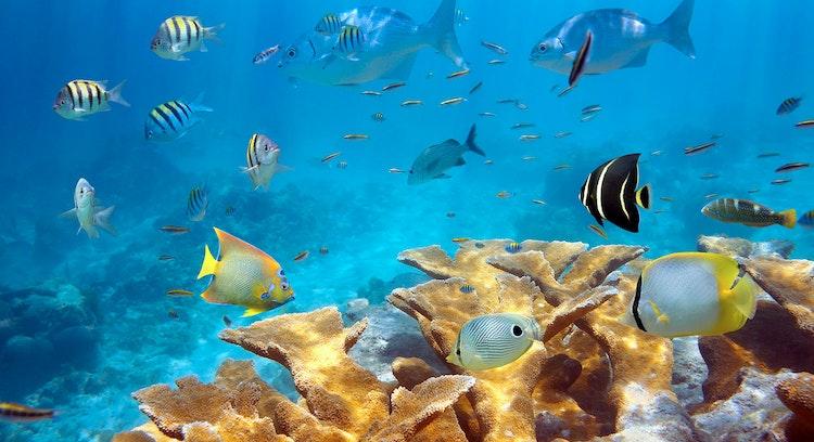 Snorkel en mar Caribe