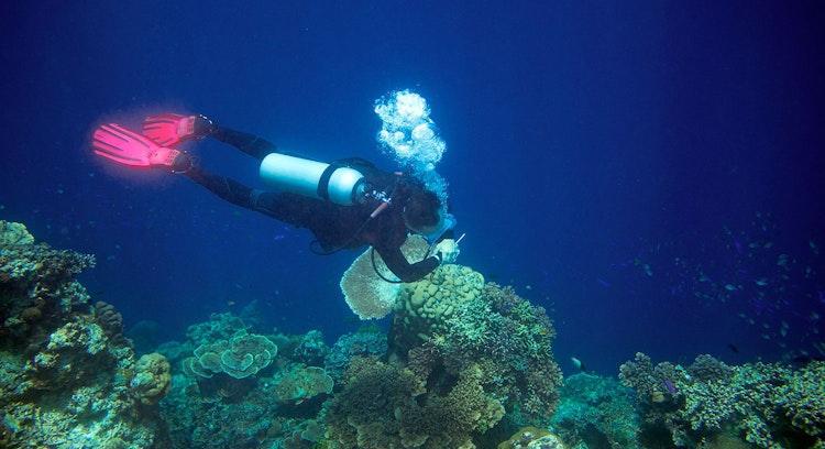 Buceo en mar Caribe