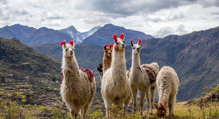 Animales en Trekking Lares
