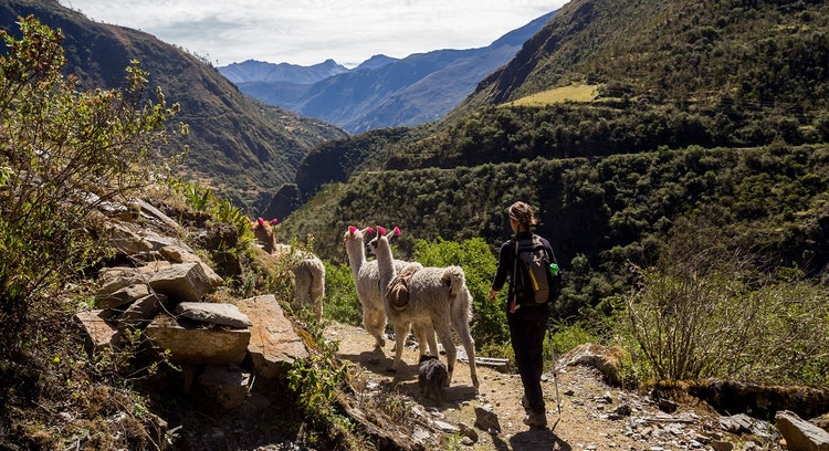 Lares Trek with a person and animals