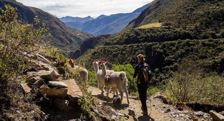 Persona y animales en Trekking Lares