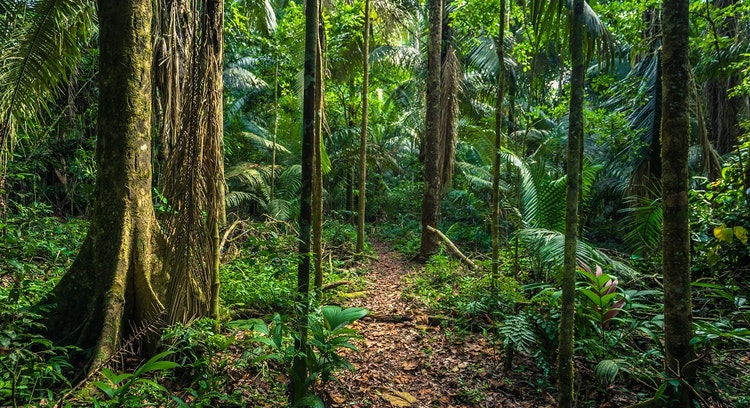 Floresta em Parque Nacional Manu 4 dias
