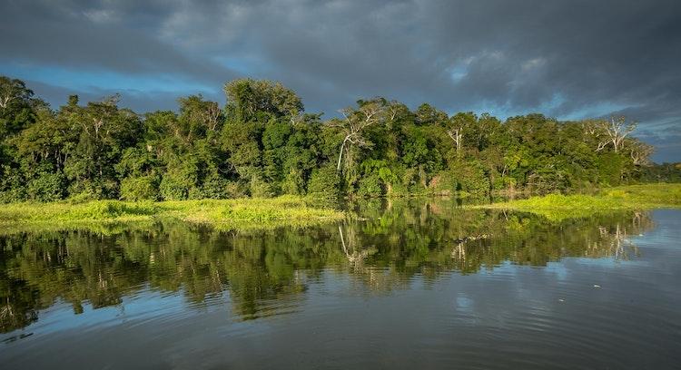 Natureza Parque Nacional Manu