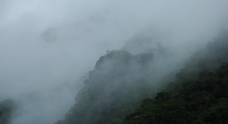 Bosque de Nubes