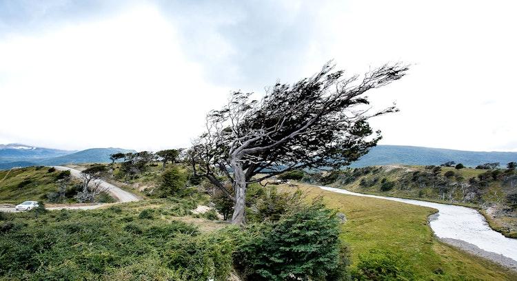 Árbol en Patagonia