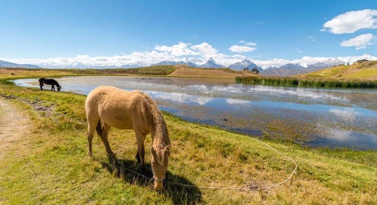Cavalo em Trilha Lagoa Wilcacocha