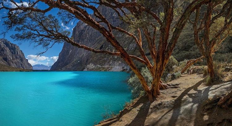 Arvore Lagoa Llanganuco