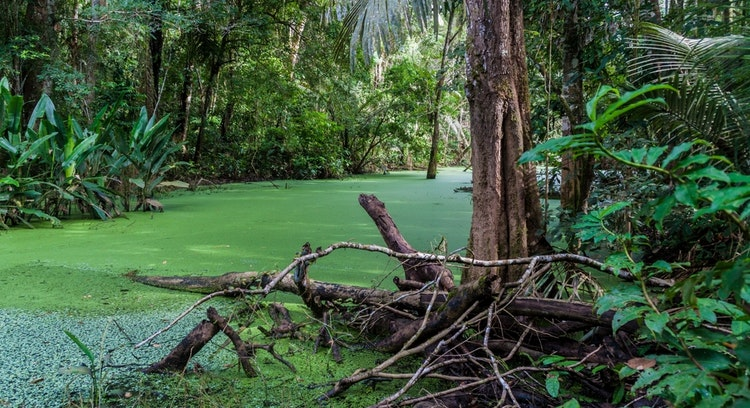 Selva Amazónica Boliviana