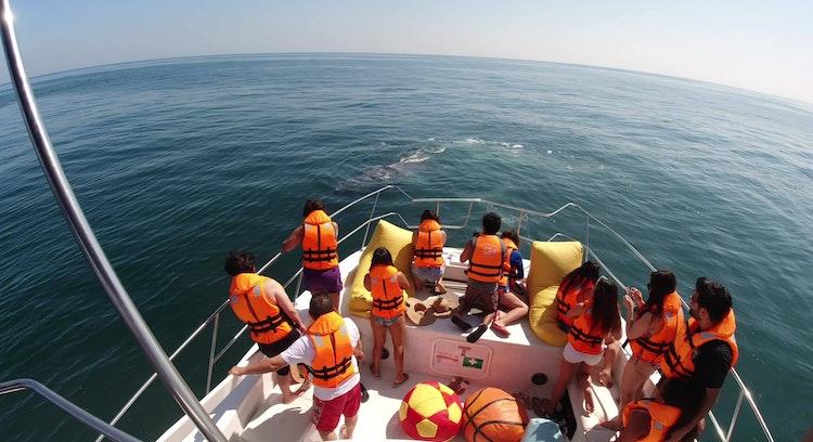 Ballena desde bote