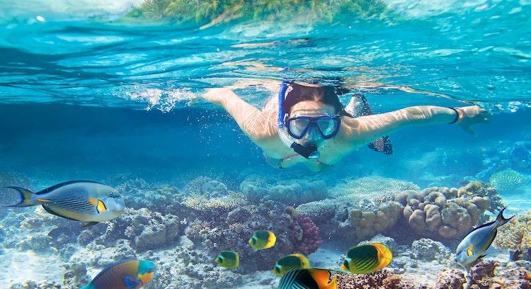 Paseo en Lancha y Snorkeling