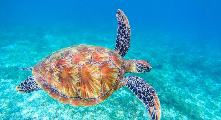 Nado con Tortugas, Pesca y Ceviche