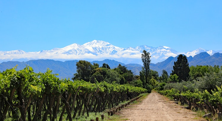 vineyard in Mendoza without people