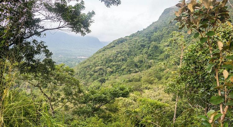 Valle en selva panameña
