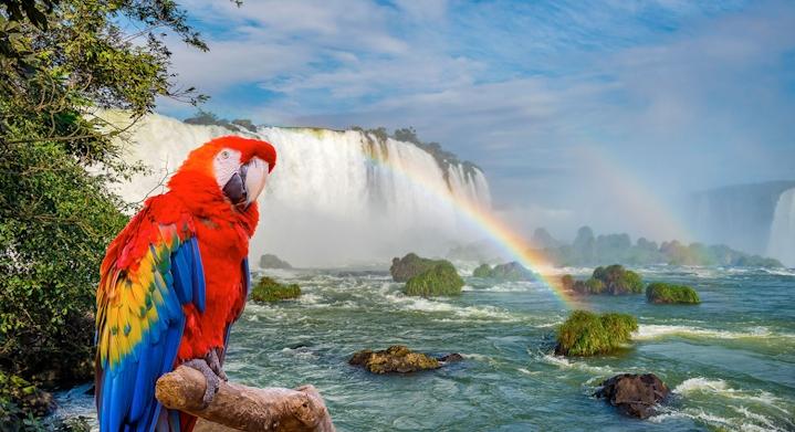 Catartas de Iguazú y parque de aves