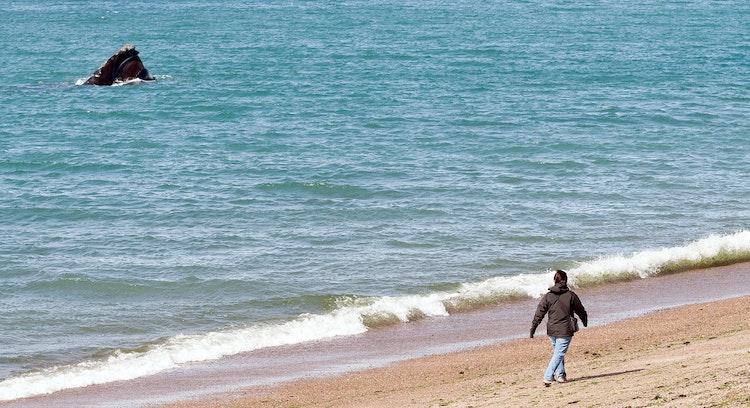Ballenas orilla playa