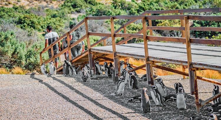 Pasarela Punta Tombo