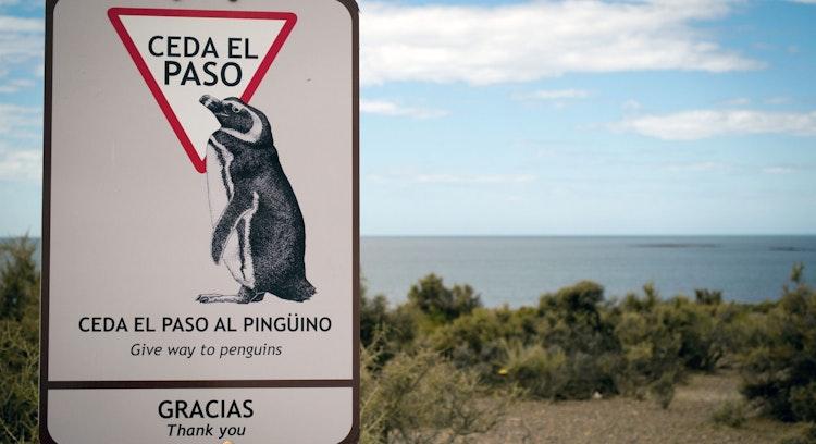 Señal pingüinos
