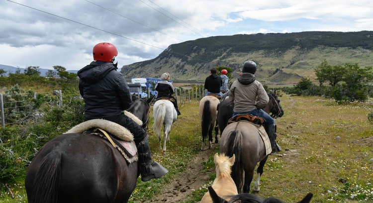 Horses on the Dorotea hill in Patagonia