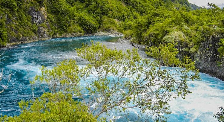 Bosque nativo rodeando las aguas turquesas del río Petrohue