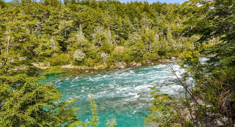 Rio entre bosques Parque Nacional