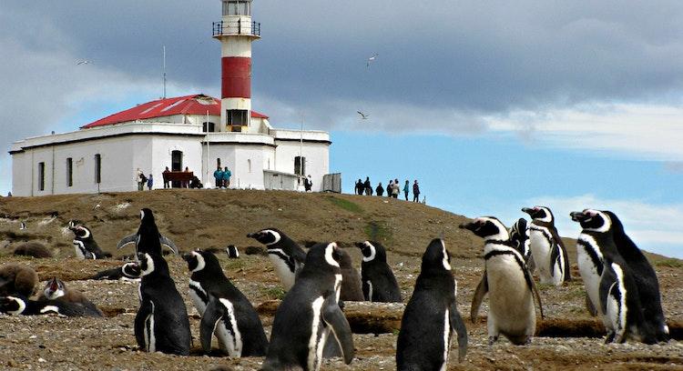 Image result for isla magdalena