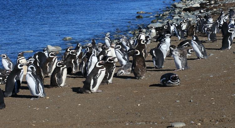 Praia de pinguins