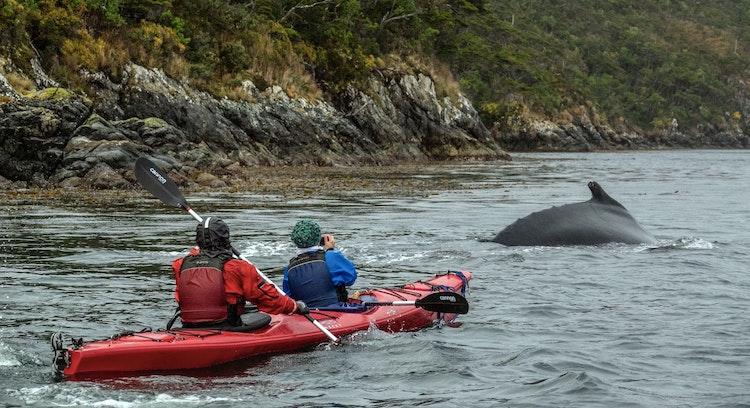 Kayak desde Punta Arenas
