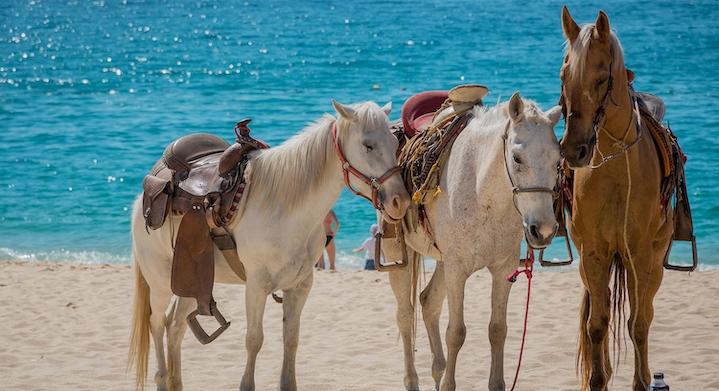 Caballos en playa Macao
