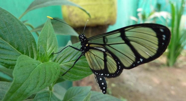 Granja de Mariposas en Mindo