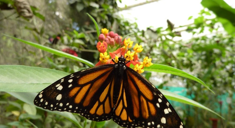 Mariposas de Ecuador