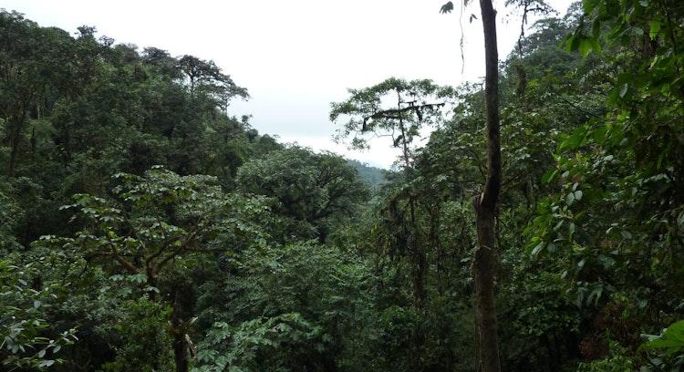 Reserva Ecológica Mindo