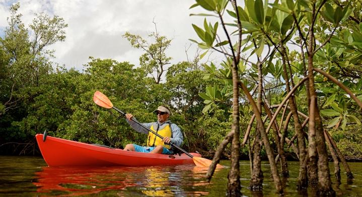 Kayak en manglares