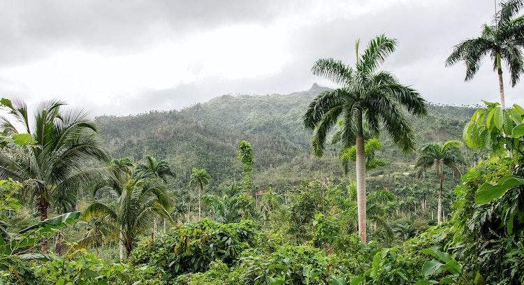 Bosque Lluvioso El Yunque