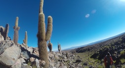 Cactus Valley Trek