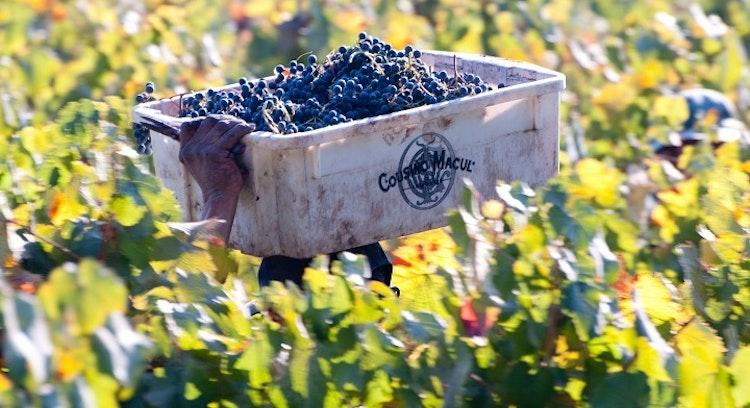 Cousiño Macul Chile Vineyard