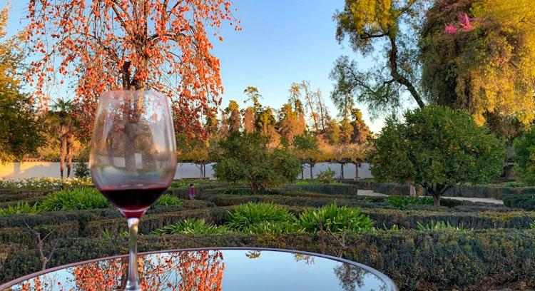 Copo de vinho na vinha Santa Rita em Santiago