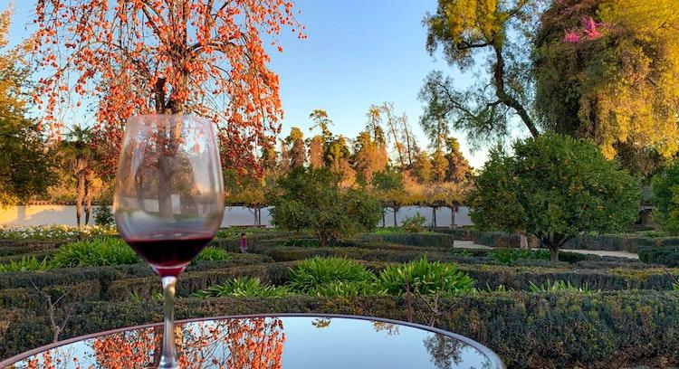 Wine glass in Santa Rita vineyard in Santiago