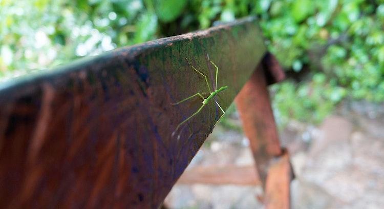 Insecto en selva de Tarapoto