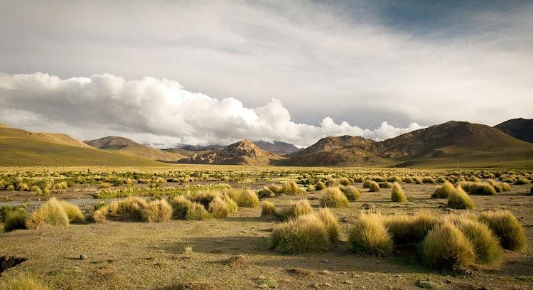 Altiplano Bolviano