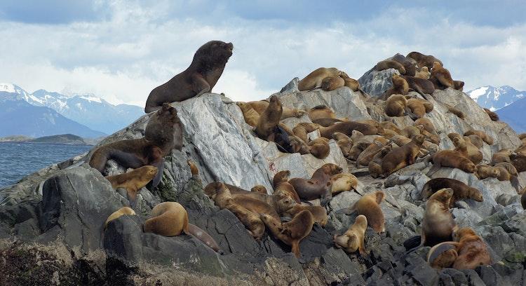 Isla Lobos en Ushuaia