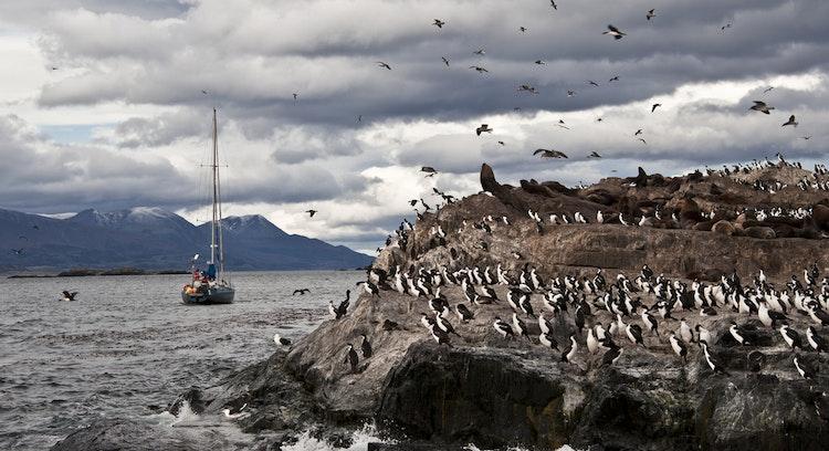 pinguinera en Ushuaia