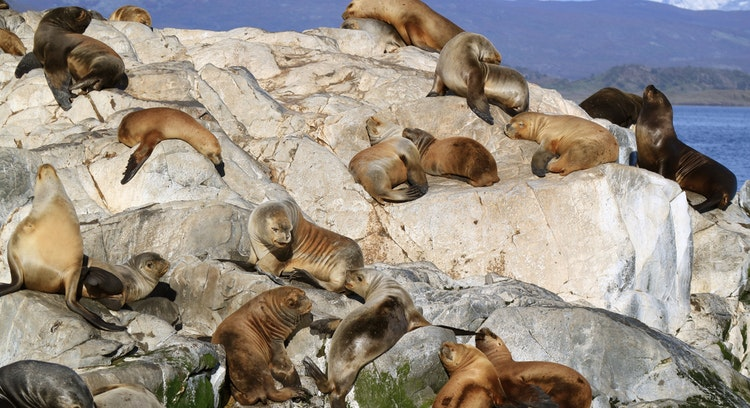 isla con lobos marinos en ushuaia