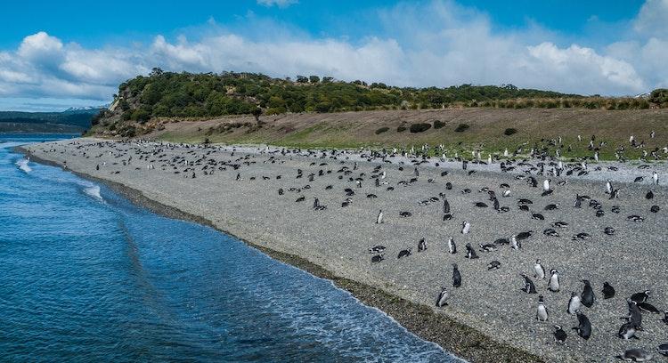 pinguinera en Ushuaia con cielo despejado