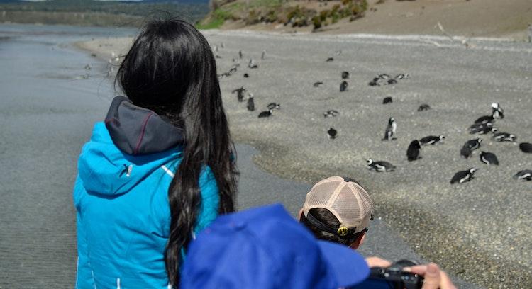 Pinguinera en Ushuaia Argentina