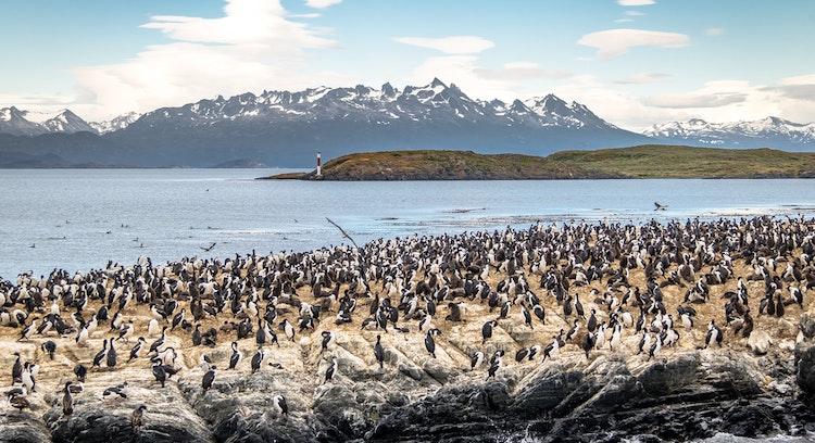 Pinguinera con Harberton en Ushuaia